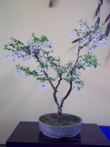 bonsai-studio1