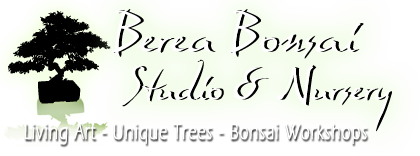 Berea Bonsai Studio & Nursery logo